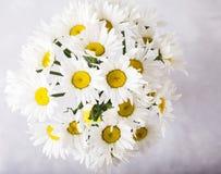 戴西花束在浅灰色的背景的 与五颜六色的花的静物画 文本的新雏菊地方 花concep 图库摄影