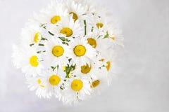 戴西花束在浅灰色的背景的 与五颜六色的花的静物画 文本的新雏菊地方 花concep 免版税图库摄影