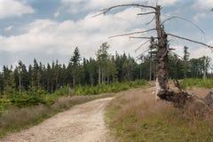 西莱亚西Beskids -一条黄色山供徒步旅行的小道的片段 库存照片