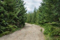 西莱亚西Beskids -一条黄色山供徒步旅行的小道的片段 免版税库存图片