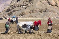 西藏农夫 免版税库存照片