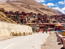 西藏妇女和走在的长发绵羊群  免版税图库摄影