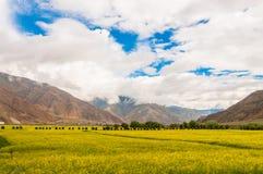 西藏恩加里Sanai 库存照片