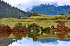 西藏明白湖 免版税库存照片