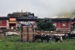 西藏村庄 库存照片