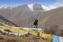 西藏牧羊人在使用会集的弹弓的四川它的牦牛 免版税库存照片