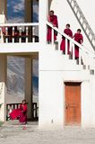 西藏男孩,新手和尚。印度 图库摄影