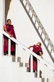 西藏男孩,新手和尚。印度 免版税图库摄影