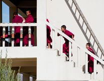 西藏男孩,新手和尚。印度 免版税库存照片