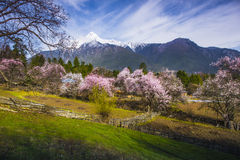 西藏的春天 免版税库存照片