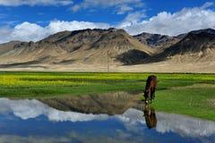 西藏的Lanscap 库存照片