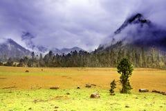 西藏结构树 库存照片