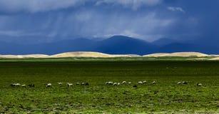 西藏阿里风景 免版税库存照片