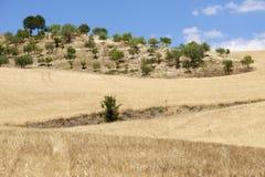 西西里人的横向 免版税库存图片