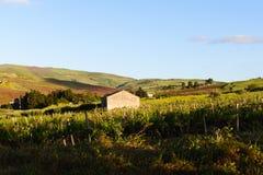 西西里人的葡萄园 免版税库存照片