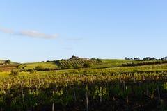 西西里人的葡萄园 免版税库存图片