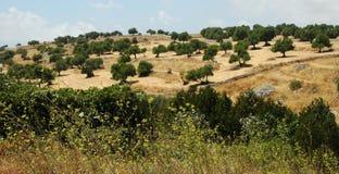 西西里人的landscape2 图库摄影