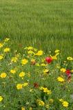 西西里岛的植物群,野花五颜六色的flossom在草甸山的,自然生物蜂蜜的生产的 库存照片