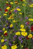 西西里岛的植物群,野花五颜六色的flossom在草甸山的,自然生物蜂蜜的生产的 库存图片