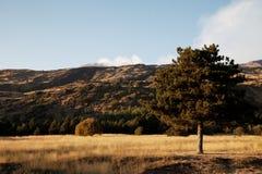 西西里岛: 挂接Etna火山 库存图片