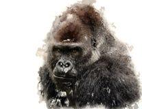 西部低地大猩猩的画象 库存图片
