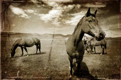 西部古色古香的马 库存图片