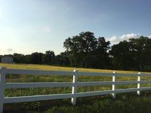 西部得克萨斯小河金黄草甸 免版税库存照片