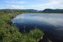 西部沼泽的溪 免版税库存照片