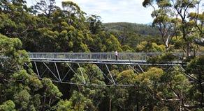 西部澳洲巨型兴奋的结构树 免版税库存图片
