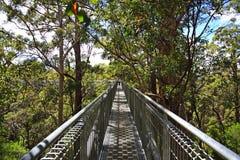 西部澳洲巨型兴奋的结构树 库存图片