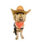 西部的狗 库存图片