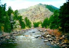 西部美国鳟鱼小河 免版税库存图片