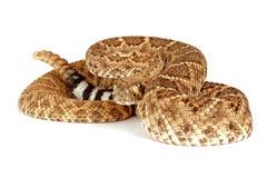 西部菱纹背响尾蛇的响尾蛇 图库摄影