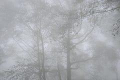 西部ghats冬天薄雾 免版税库存照片