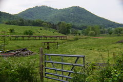 西部NC山母牛牧场地 免版税库存照片
