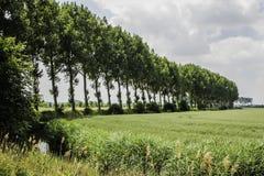 西部Zeeuws富兰德,荷兰 免版税图库摄影