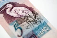 巴西金钱 免版税库存照片