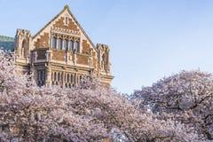 西雅图华盛顿大学,西雅图, washingto n,美国 04-03-2017 :ch 免版税库存照片
