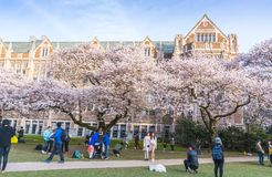 西雅图华盛顿大学,西雅图, washingto n,美国 04-03-2017 :ch 库存照片
