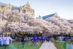 西雅图华盛顿大学,西雅图, washingto n,美国 04-03-2017 :ch 库存图片