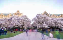 西雅图华盛顿大学,西雅图, washingto n,美国 04-03-2017 :ch 免版税库存图片