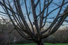 西雅图春天树摘要 免版税图库摄影