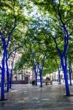西雅图的蓝色树 免版税库存照片
