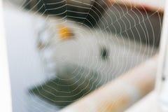西雅图, WA - 2017年10月28日:渔夫` s终端 蜘蛛网看法  免版税库存图片