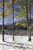 从西马伦河谷观看的花花公子峰顶 免版税库存照片