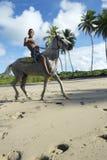 年轻巴西骑乘马巴伊亚海滩巴西 库存图片