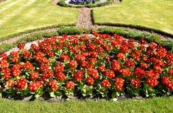 西洋樱草和平的巨人花圃 图库摄影