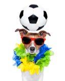 巴西滑稽的足球狗 图库摄影