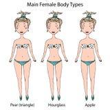 主要女性身体形状类型 滴漏、梨或者三角和苹果计算机 现实手拉的乱画样式剪影 向量 免版税库存图片