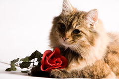 要求猫年轻人 免版税图库摄影